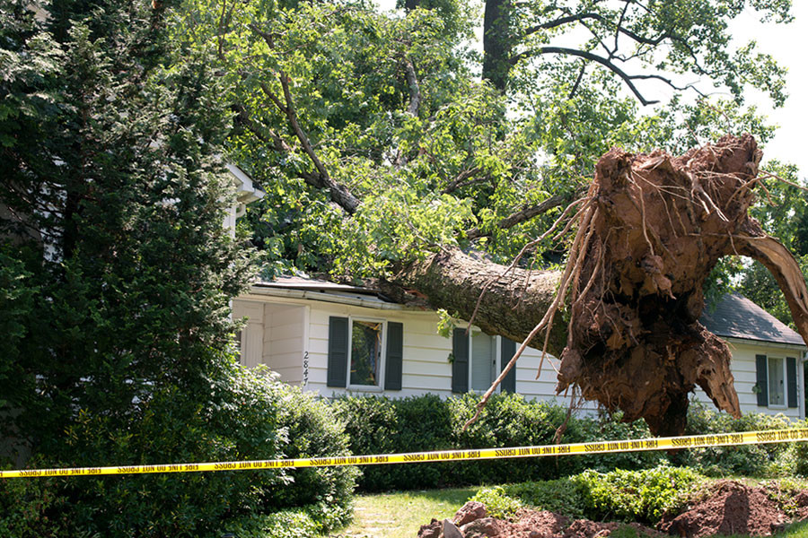 Hazard Tree Removal Begins with Awareness of the Problem