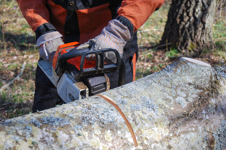 Watch Out for Insect Pests in Your Deciduous Trees