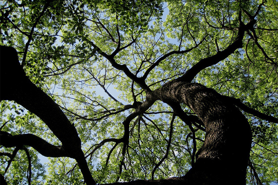 Our Boise Arborist Recommends Investing in Shade Trees
