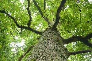 Boise ISA Certified Arborist