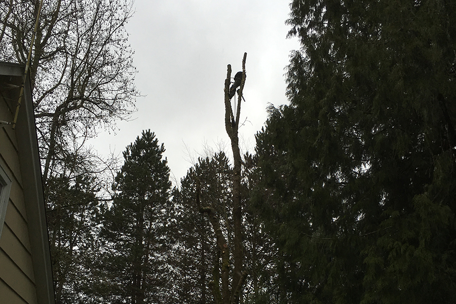 Tree Maintenance Tree Removal