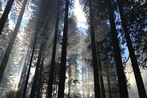 Pruning Deciduous Trees