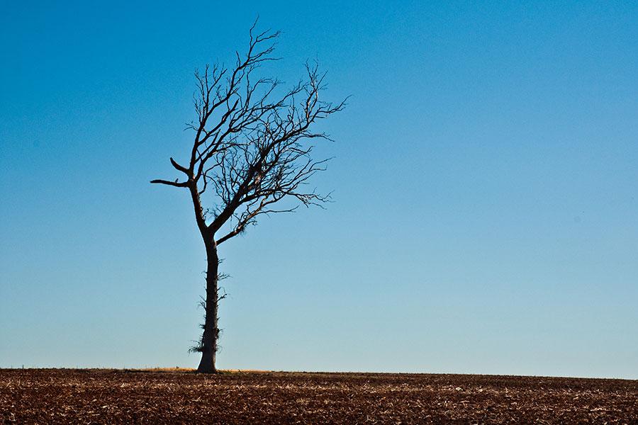 Tree Care Drought Stress