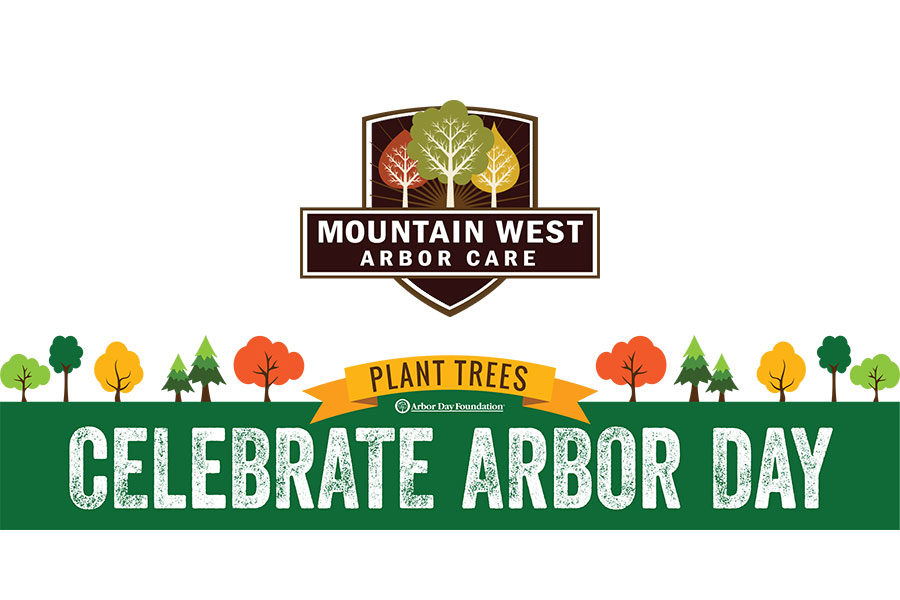 Preventative Tree Care: Arbor Day Tips on the Benefits of Deadwood Removal