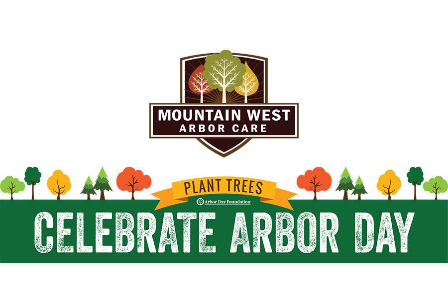 Preventative Tree Care Deadwood Removal