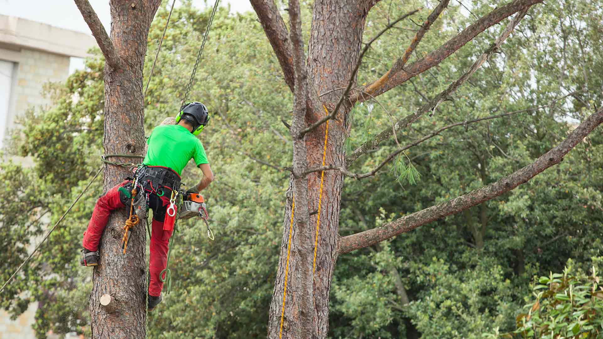 Mountain West Arbor Care: Tree Care Experts