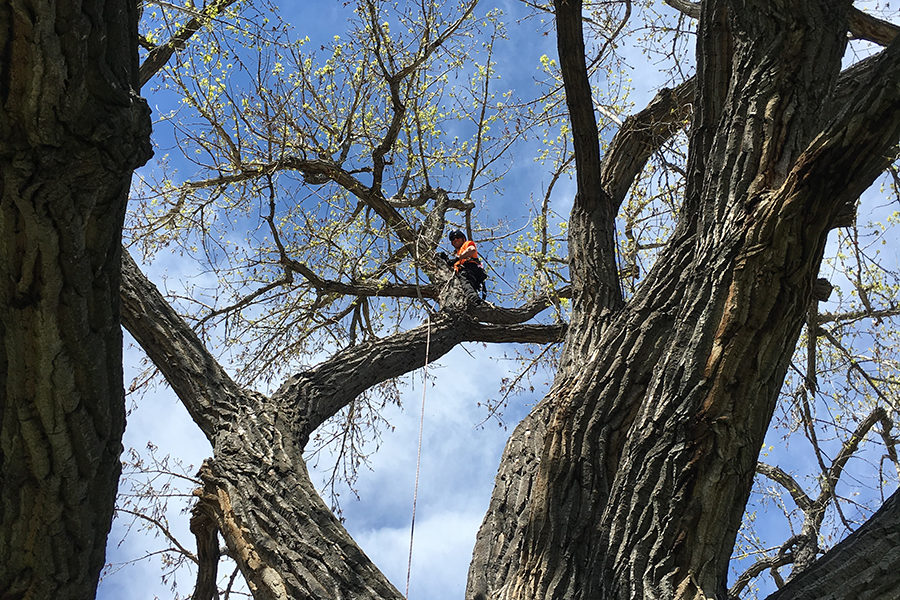 ISA Certified Arborist Recommendations for Idaho Falls