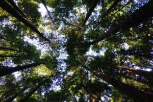 Tree Care in Rigby and Rexburg, Idaho