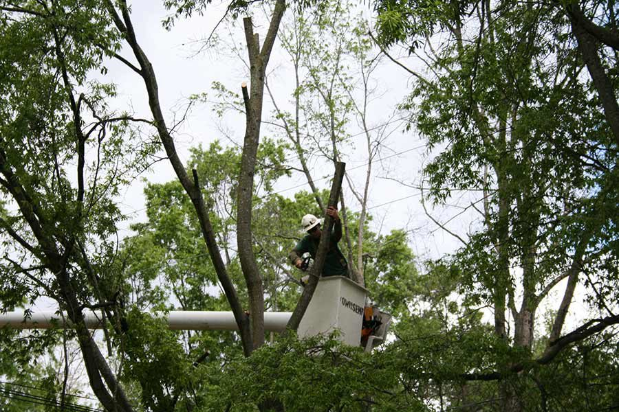 Arborist Recommendations: 5 Reasons Why You Should Never Top Your Trees