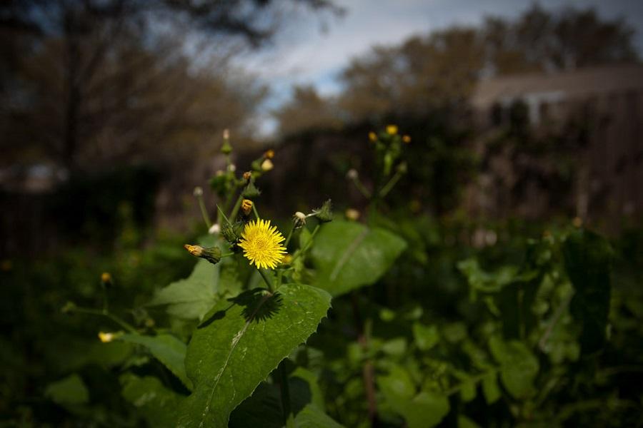 Herbicides and Preventative Tree Care in Sandy, Utah