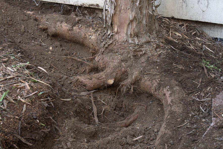 Root Damage & Preventative Tree Care in Logan, Utah