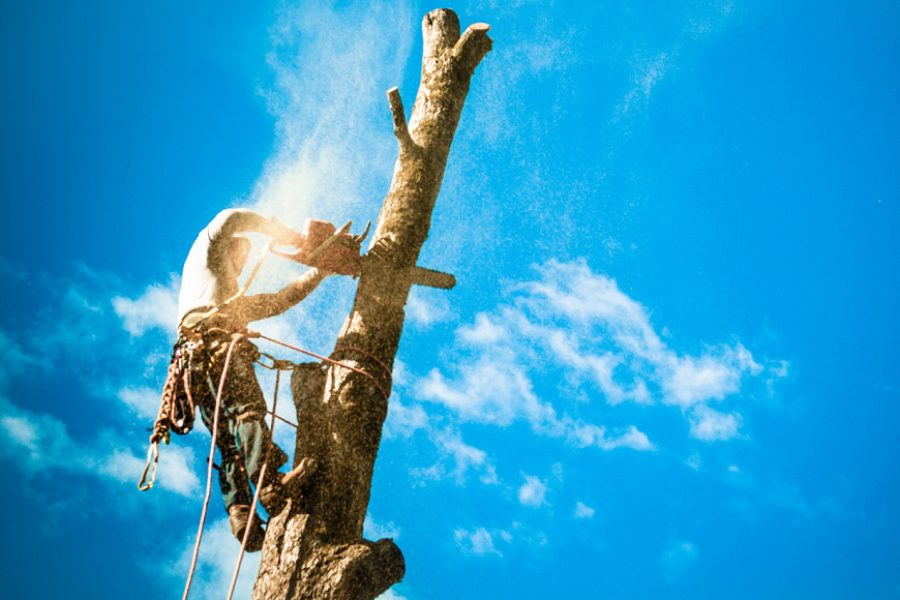 Why It's Important to Hire a Certified Arborist in Provo, Utah