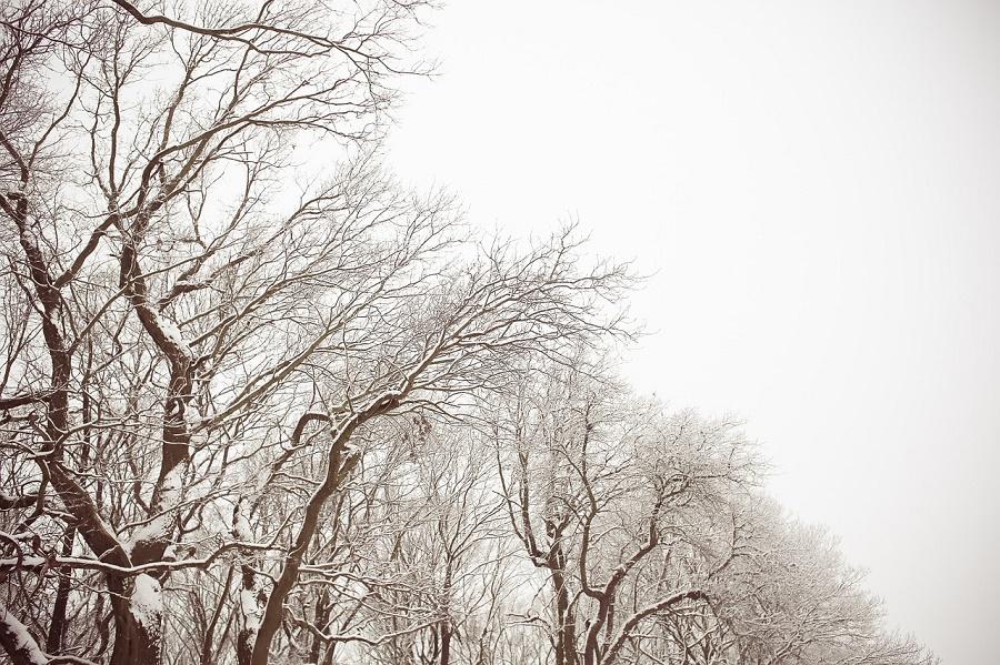 trees-864992_1280