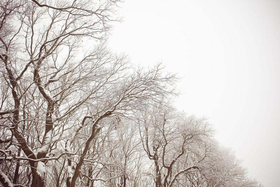 Preventative Tree Care & Deadwood Removal