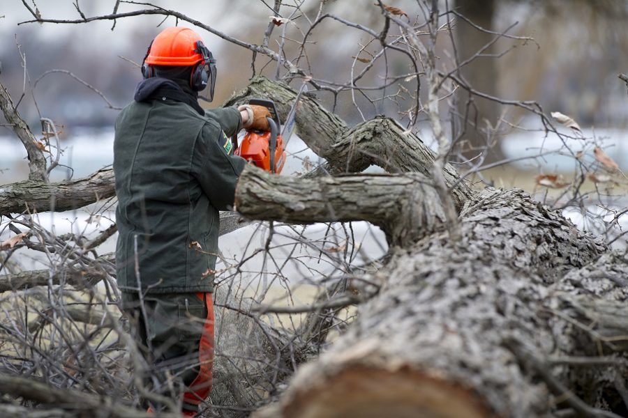 Prevent Hazardous Trees With A Certified Arborist