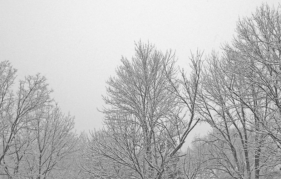After the Storm: Winter Tree Care Tips in Boise, Idaho