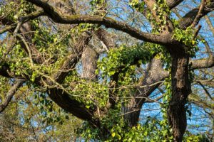 Boise tree care