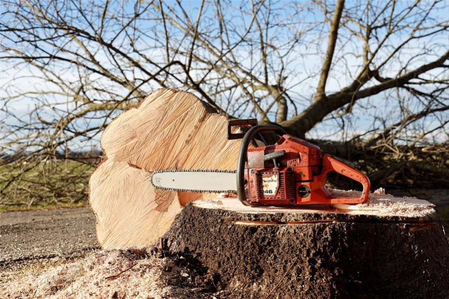 Deciding Whether You Need An Idaho Falls Tree Removal Service