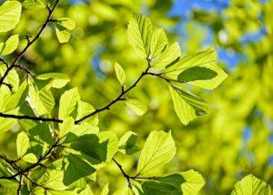 Idaho Falls Tree Care