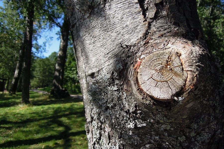 Reasons That Warrant A Salt Lake Tree Removal Service