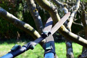 Salt Lake City Tree Pruning