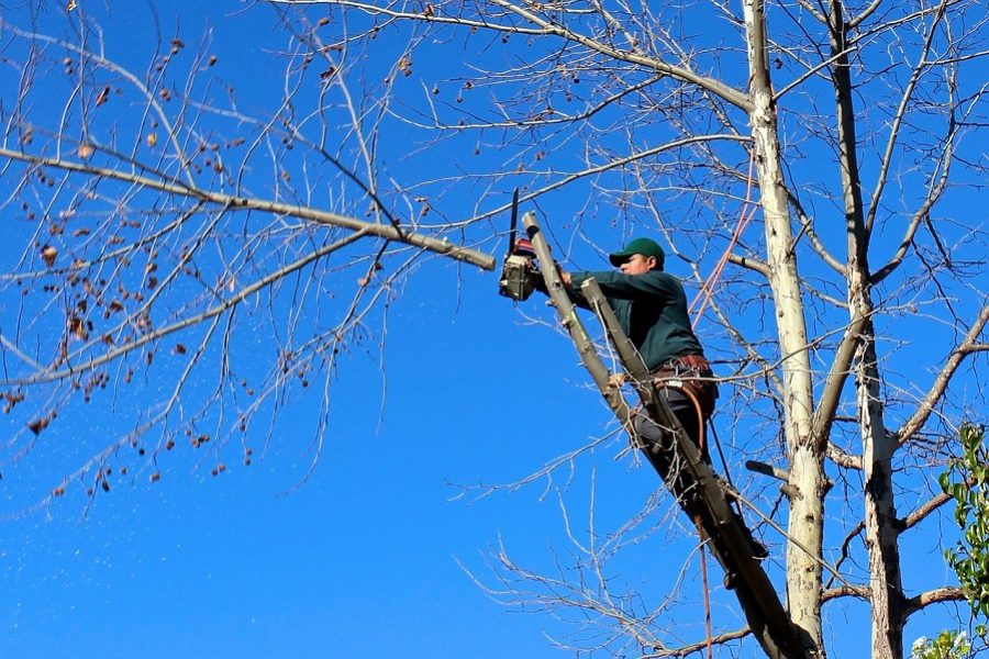 How Dangerous Is Tree Trimming?